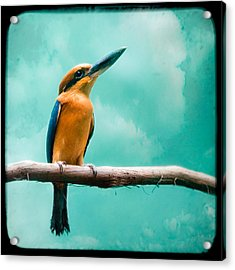 Acrylic Print featuring the photograph Guam Kingfisher - Exotic Birds by Gary Heller
