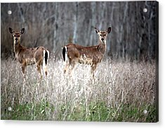 Acrylic Print featuring the photograph Guard Duty Whitetail Deer by Penny Hunt