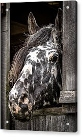 Guard Horse-what's The Password? Acrylic Print