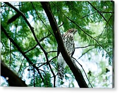 Guardian Acrylic Print by Barbara Shallue