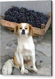 Guardian Of The Grapes Acrylic Print by Barbie Corbett-Newmin