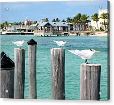 Guardians Of Key West Acrylic Print