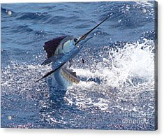 Guatemala Sailfish Acrylic Print by Carey Chen