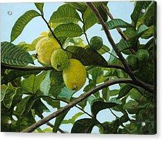 Guava Acrylic Print