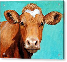 Guernsey Cow On Light Teal No Horns Acrylic Print