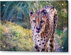 Guess Whose Hungry Acrylic Print by Tim Stanley