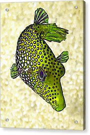 Guinea Fowl Puffer Fish In Green Acrylic Print