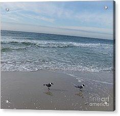 Acrylic Print featuring the photograph Gulf Shore  by Deborah DeLaBarre