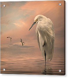 Acrylic Print featuring the photograph Gulf Sunset by Brian Tarr