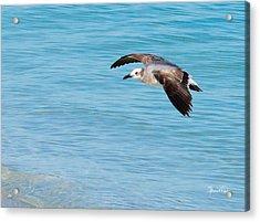 Gull At Lido Beach IIi Acrylic Print