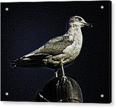 Gull At Sundown Acrylic Print by Joe Bledsoe