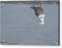 Gull At The Beach Acrylic Print