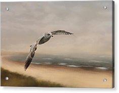 Gull At The Shore Acrylic Print by Jai Johnson