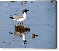 Acrylic Print featuring the photograph Gull In Seaweed by Linda Cox