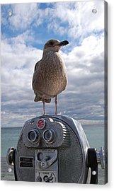 Gull Acrylic Print by Mim White