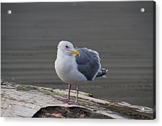 Acrylic Print featuring the photograph Gull On A Log by David Stine