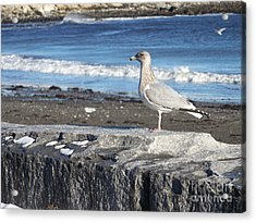 Acrylic Print featuring the photograph Seagull  by Eunice Miller