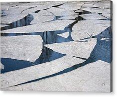 Gull On Ice Acrylic Print