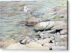 Gull On The Rocks Acrylic Print