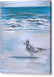 Gull On The Shore Acrylic Print by MM Anderson