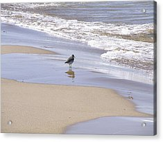 Gull On The Shore Acrylic Print by Richard Gregurich