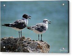 Gull Talk Acrylic Print