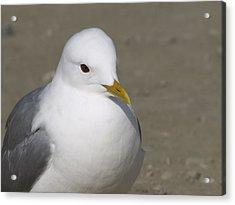 Gull Acrylic Print by Tara Lynn