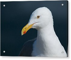 Gull Watcher Acrylic Print by Bob Smithing