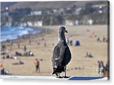 Gull Watching Beach Visitors Acrylic Print by Susan Wiedmann