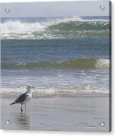 Gull With Parallel Waves Acrylic Print