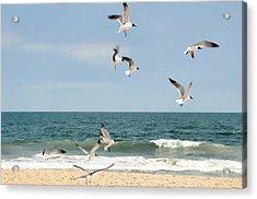 Gulls A Dance'n Acrylic Print by Diana Angstadt