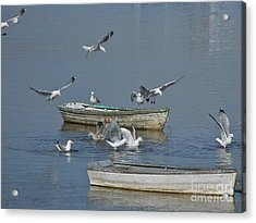Gulls And Dories Acrylic Print by Christopher Mace