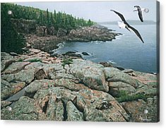 Acrylic Print featuring the drawing Gulls At Monument Cove by Brent Ander