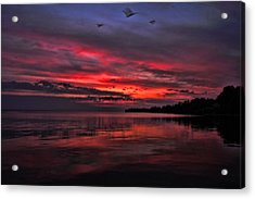 Gulls At Sunrise Acrylic Print