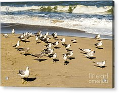 Gulls At The Beach Acrylic Print