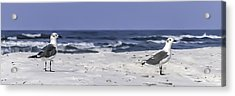 Gulls By The Sea Acrylic Print by CarolLMiller Photography