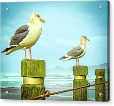 Gulls Acrylic Print by Denise Darby