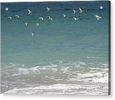 Gulls Flying Over The Ocean Acrylic Print by Zina Stromberg
