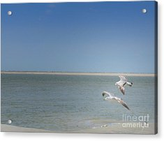 Acrylic Print featuring the photograph Gulls In Flight by Erika Weber