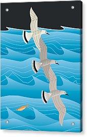 Gulls Acrylic Print