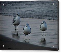 Acrylic Print featuring the photograph Gulls Night Out by Kimberly Mackowski