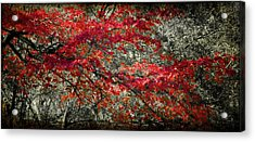 Gum Fall Acrylic Print by Lana Trussell