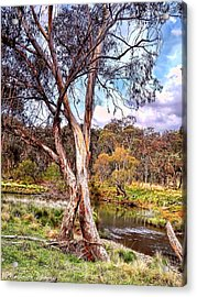 Acrylic Print featuring the photograph Gum Tree By The River by Wallaroo Images