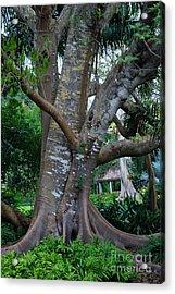 Gumby Tree Acrylic Print by Judy Wolinsky