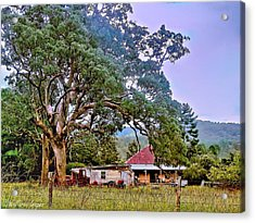 Acrylic Print featuring the photograph Gumtree Gully by Wallaroo Images
