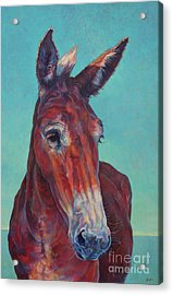 Gunthor Acrylic Print by Patricia A Griffin