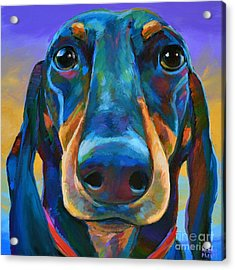 Gus Acrylic Print by Robert Phelps