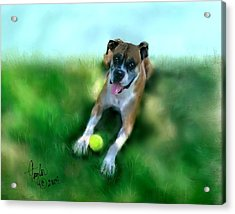 Gus The Rescue Dog Acrylic Print by Colleen Taylor