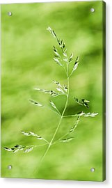 Gust Of Wind - Featured 3 Acrylic Print by Alexander Senin