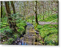 Gweek Woods Acrylic Print